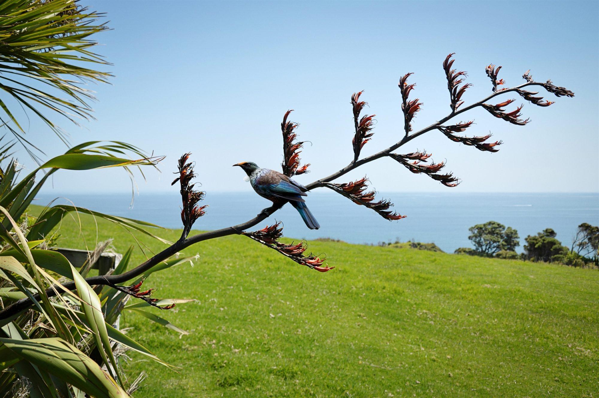 Pest-Free Devonport Peninsula